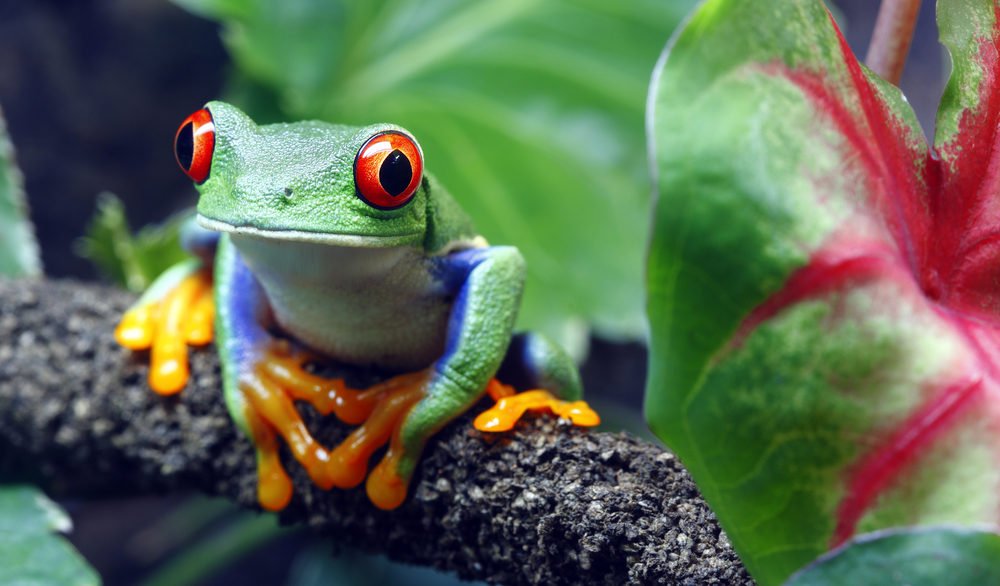 TRAVELING TO COSTA RICA? HERE ARE NINE ANIMALS YOU MUST SEE.